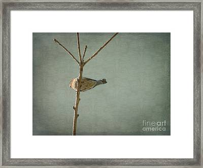 Peaceful Perch Framed Print