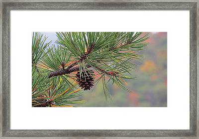 Peaceful Pinecone Framed Print by Stephen Melcher