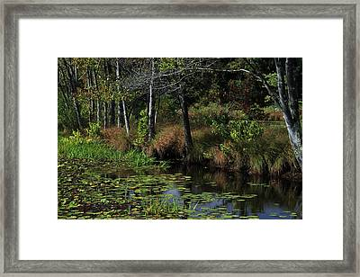Peaceful Pond Framed Print by Karol Livote