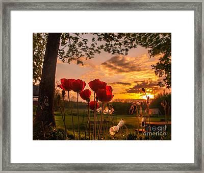 Peaceful Poppy Framed Print