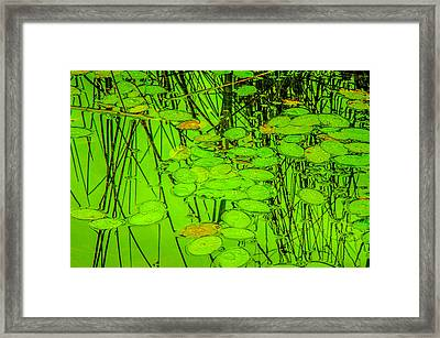 Lily Pads And Reed Reflections Framed Print by Roxy Hurtubise