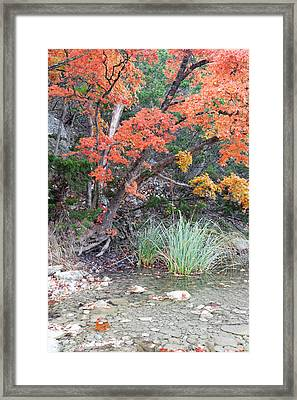 Peaceful Retreat Lost Maples Texas Hill Country Framed Print
