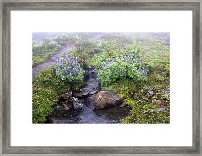 Peaceful  Framed Print by Sylvia Hart