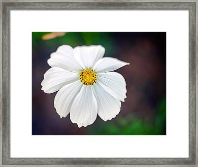Peaceful Framed Print by Tammy Smith