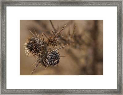 Thistle Balls Framed Print by Scott Holmes