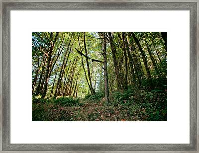 Peaceful Woods Framed Print by Bonnie Bruno