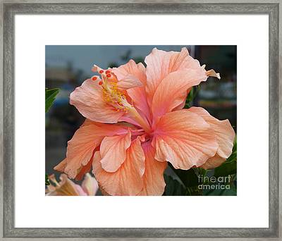 Framed Print featuring the photograph Peach And Cream by Lingfai Leung
