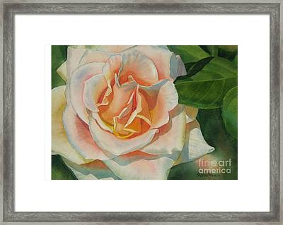 Peach And Gold Colored Rose Framed Print