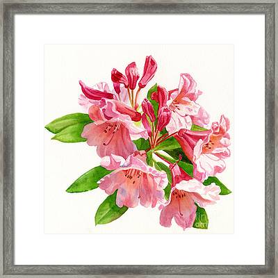 Peach And Pink Rhododendron Framed Print