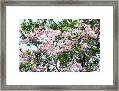 Peach Blossom Cassia Framed Print by Andres LaBrada