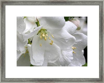 Peach Blossoms Framed Print by Anne Babineau