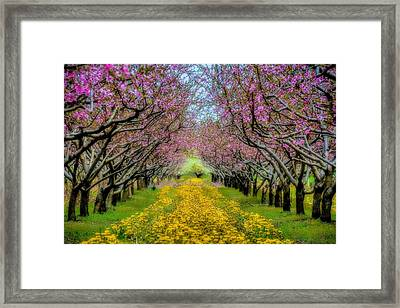 Peach Blossoms Dandelion Carpet Framed Print
