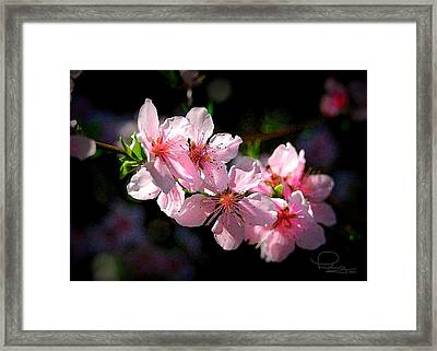 Framed Print featuring the photograph Peach Blossoms by Ludwig Keck