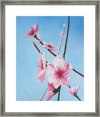 Peach Blossoms Framed Print by Mary Rogers