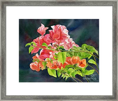 Peach Colored Bougainvillea With Dark Background Framed Print