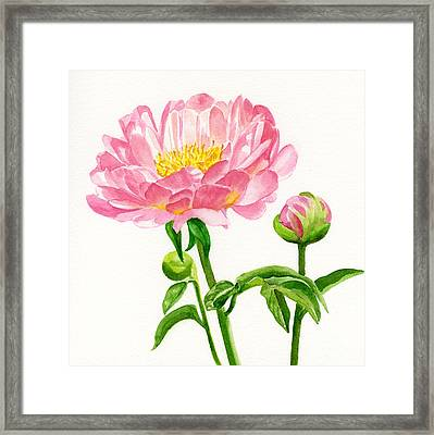 Peach Colored Peony With Buds Framed Print