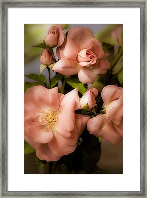 Peach Floribunda Roses Framed Print by Julie Palencia