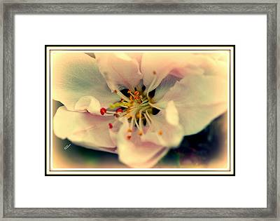 Peach Flower Framed Print