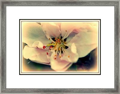 Framed Print featuring the photograph Peach Flower by Karen Kersey
