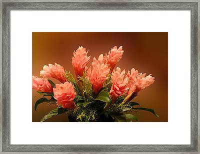 Peach Gibger Blossoms Framed Print by Linda Phelps