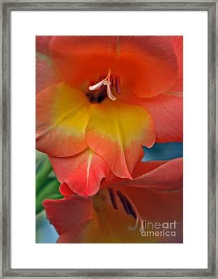 Peach Glads  Framed Print