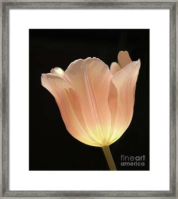 Peach Glow Framed Print