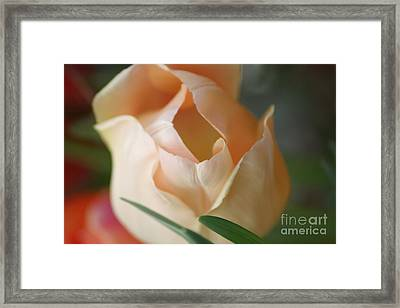 Framed Print featuring the photograph Peach Harmony by Mary Lou Chmura