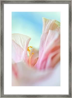 Peach Hibiscus. Macro Framed Print by Jenny Rainbow