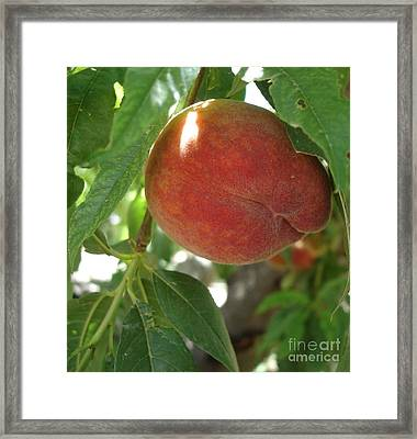 Peach Framed Print by Kerri Mortenson