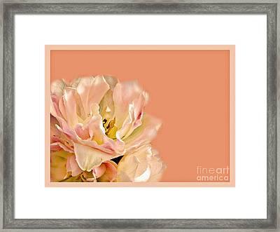Peach Rose Framed Print by Carol F Austin