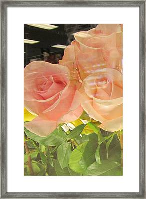 Peach Roses In Greeting Card Framed Print