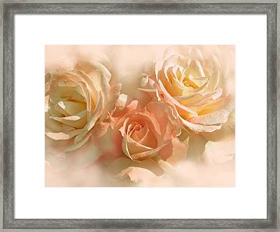 Peach Roses In The Mist Framed Print