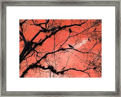 Peach Sky Framed Print by Rosalie Scanlon