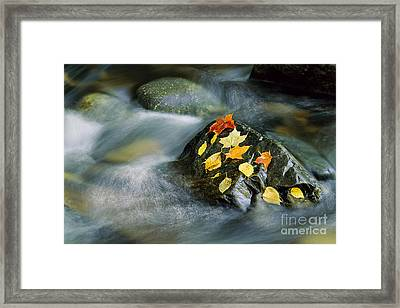 Framed Print featuring the photograph Peacham Brook In Fall by Alan L Graham