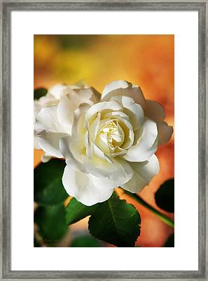 Peaches And Cream Framed Print by Christina Rollo