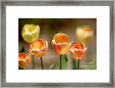 Peaches And Cream Framed Print by Living Color Photography Lorraine Lynch