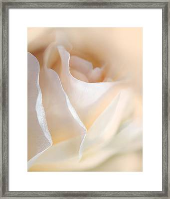 Peaches And Cream Rose Flower Framed Print by Jennie Marie Schell