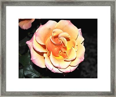 Peaches And Cream With A Dolop Of Lemon Framed Print