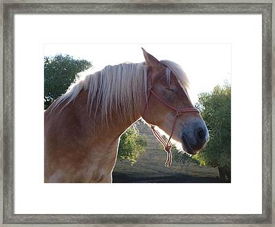 Peaches Framed Print by Jenessa Rahn
