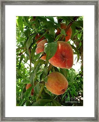 Framed Print featuring the photograph Peaches On The Tree by Kerri Mortenson