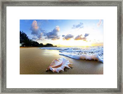 Peachs N' Cream Framed Print by Sean Davey