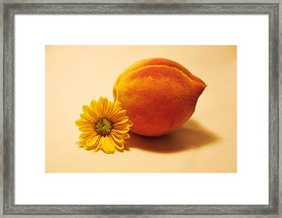 Peachy Framed Print by Linda Segerson