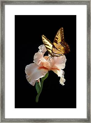Peachy Tasty Sip Framed Print
