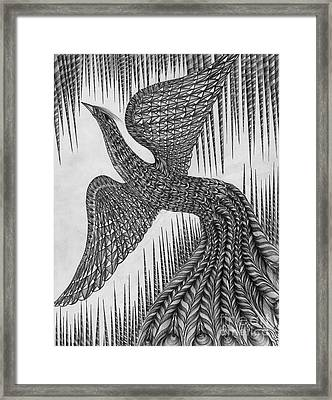 Peacock Framed Print by Anca S