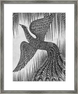 Peacock Framed Print by Anca S