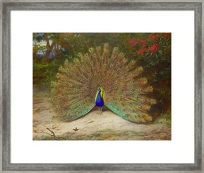 Peacock And Peacock Butterfly Framed Print by Archibald Thorburn