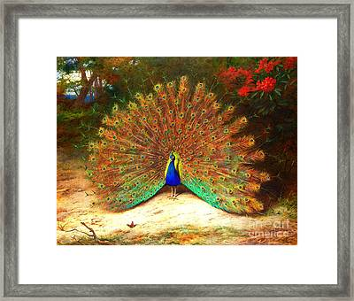 Peacock And Peacock Butterfly Framed Print