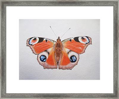 Peacock Butterfly Framed Print by Ele Grafton