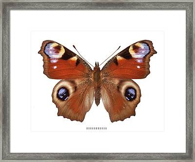 Peacock Butterfly Framed Print by Natural History Museum, London
