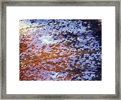 Peacock Butterfly Wing Scale Detail Framed Print by Frans Hodzelmans